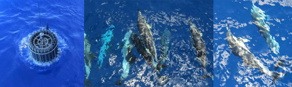 CTD deployment and dolphins